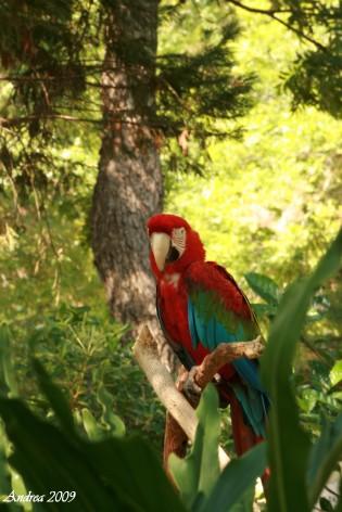 parrot 2 wm