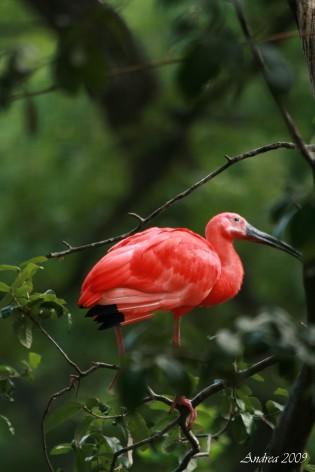 redbird wm